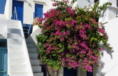 #03137, Authentic Folegandros island house